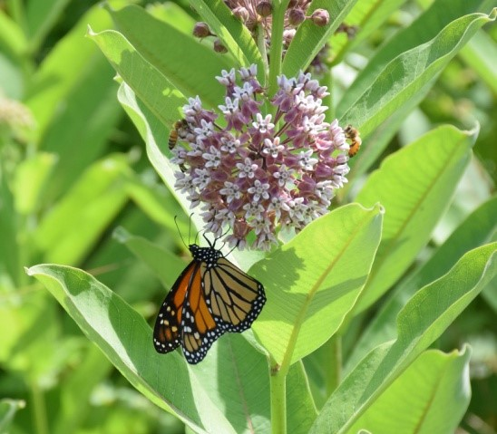 Learn about the Butterfly Highway